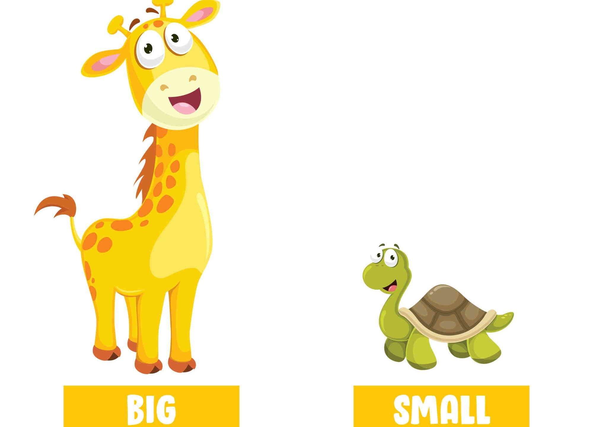 Adjetivos inglés big small jirafa tortuga