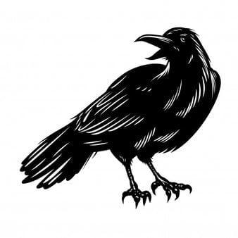 Cuervo de color negro